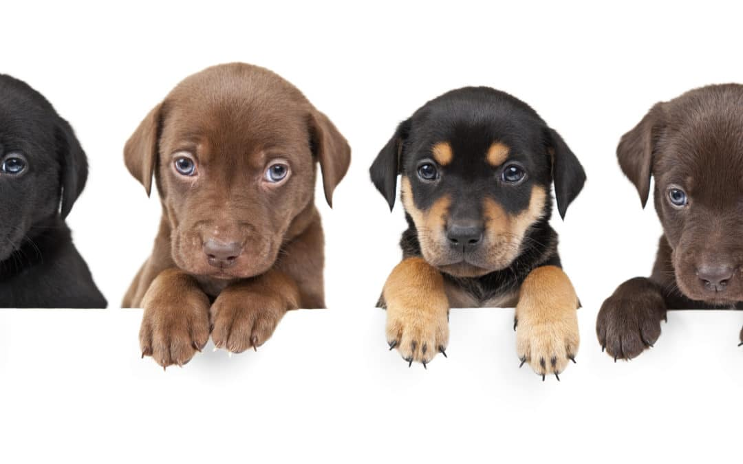 How-To: Puppy Proofing Your Home