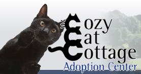 best cat charities